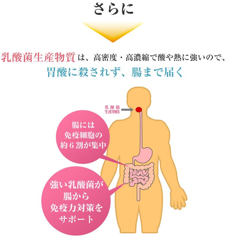 乳酸菌生産物質は、高密度・高濃縮で酸や熱に強いので、胃酸に殺されず、腸まで届く