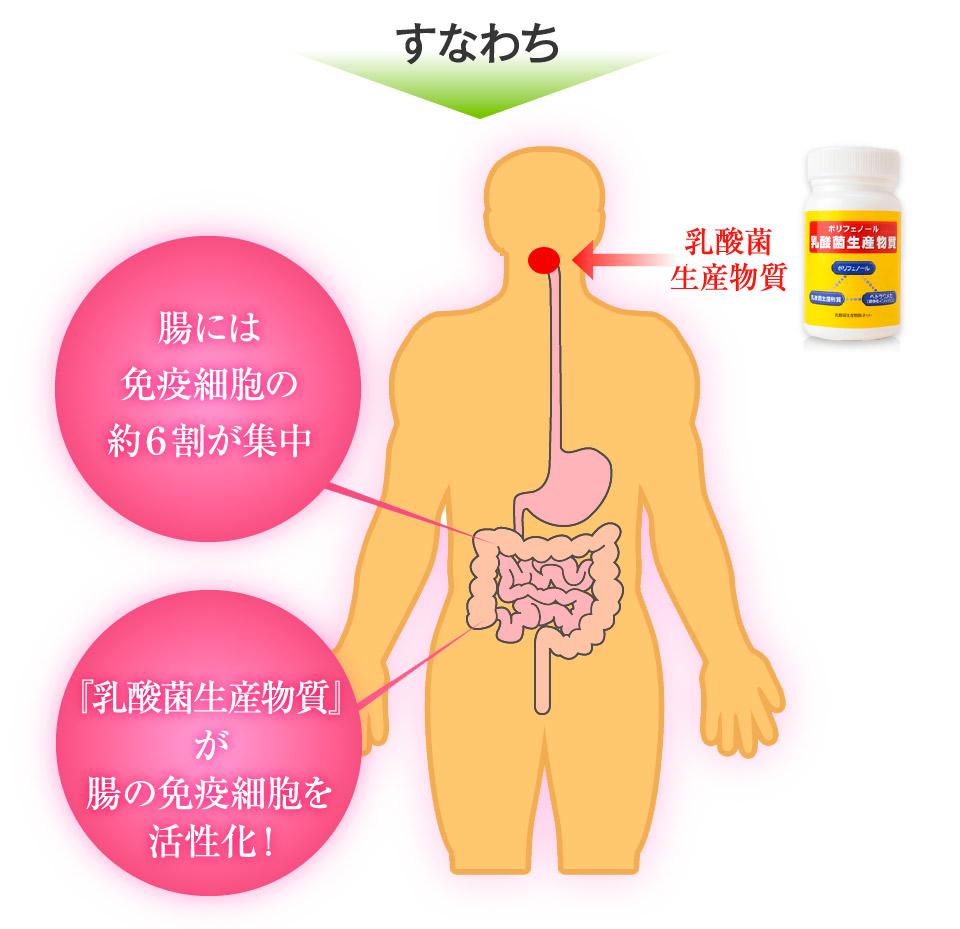 腸には免疫細胞の約6割が集中